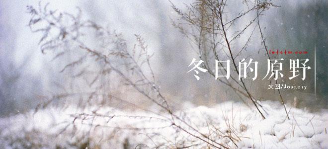 冬日的原野