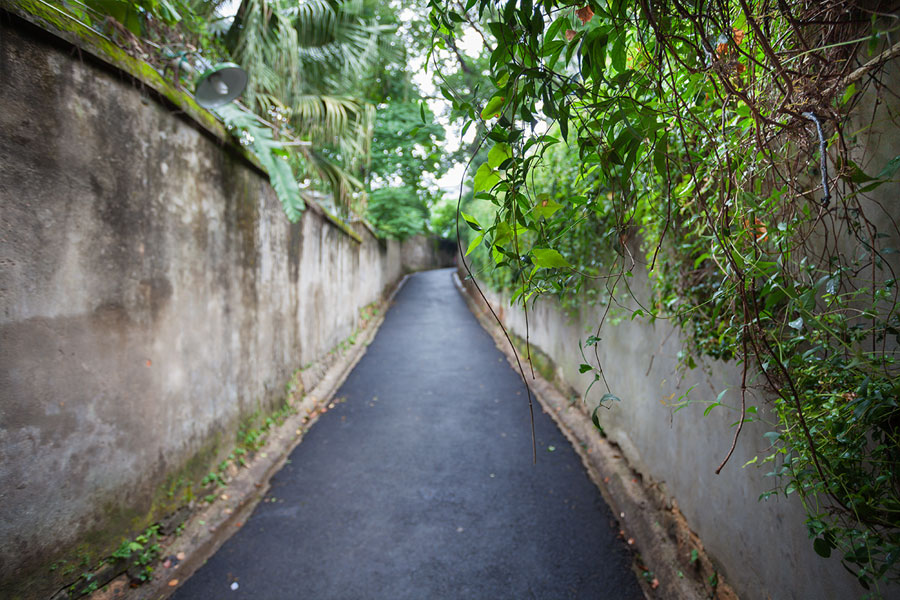 福州仓山老街:绿色掩映时光斑斓