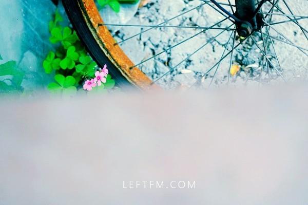 摄影:雁庭 心理译作:背叛