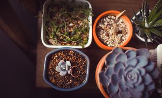 让生活更精致:我迷上了多肉植物