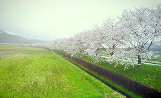 漫漫樱花祭