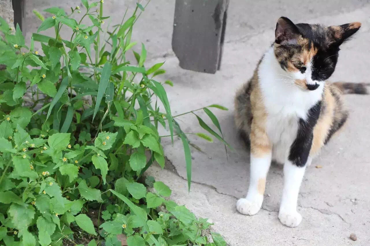 小眼睛流浪猫阿美的故事