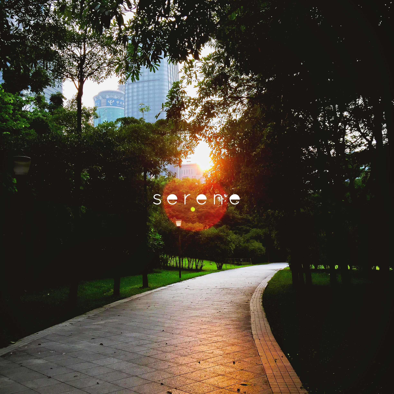 摄于2015年10月21日下午,深圳市民中心广场。