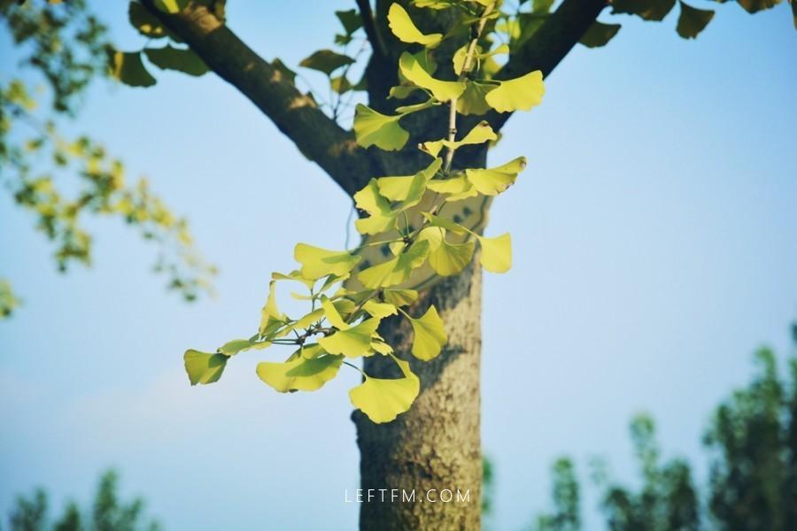 心无故事简若纸,半是心境半是爱