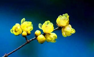 心若向阳,花便绽放