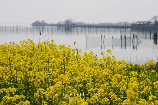 阳澄湖已是春光一片,你还宅家苟且吗?