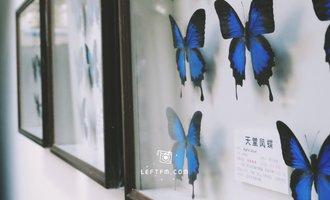 牵手去看:大自然昆虫博物馆&公主学院