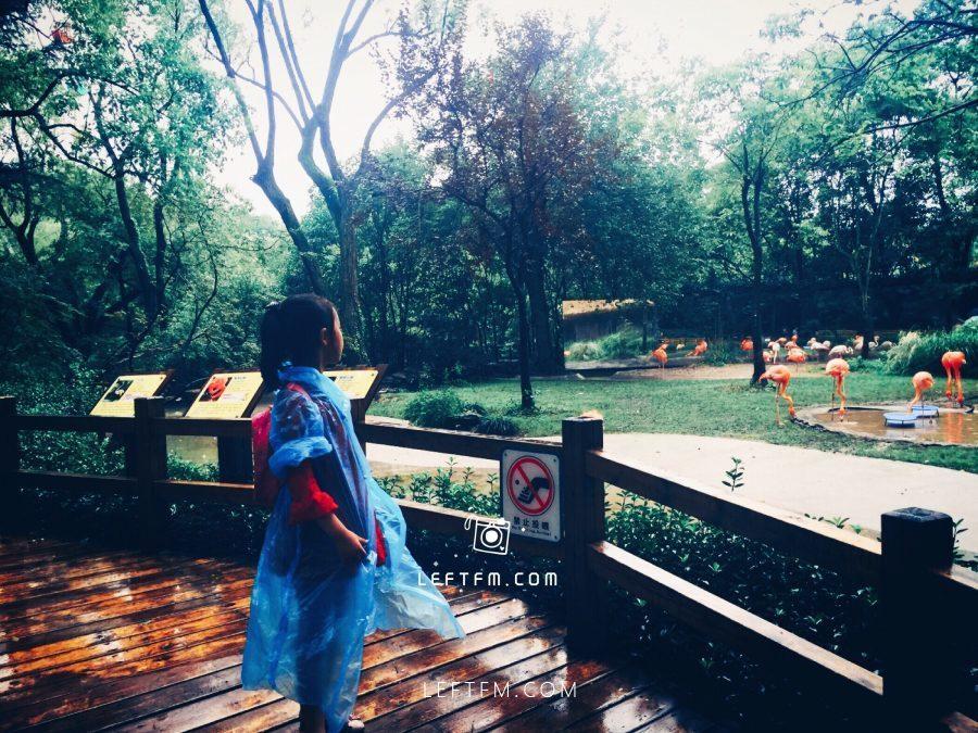 牵手去看:上海动物园