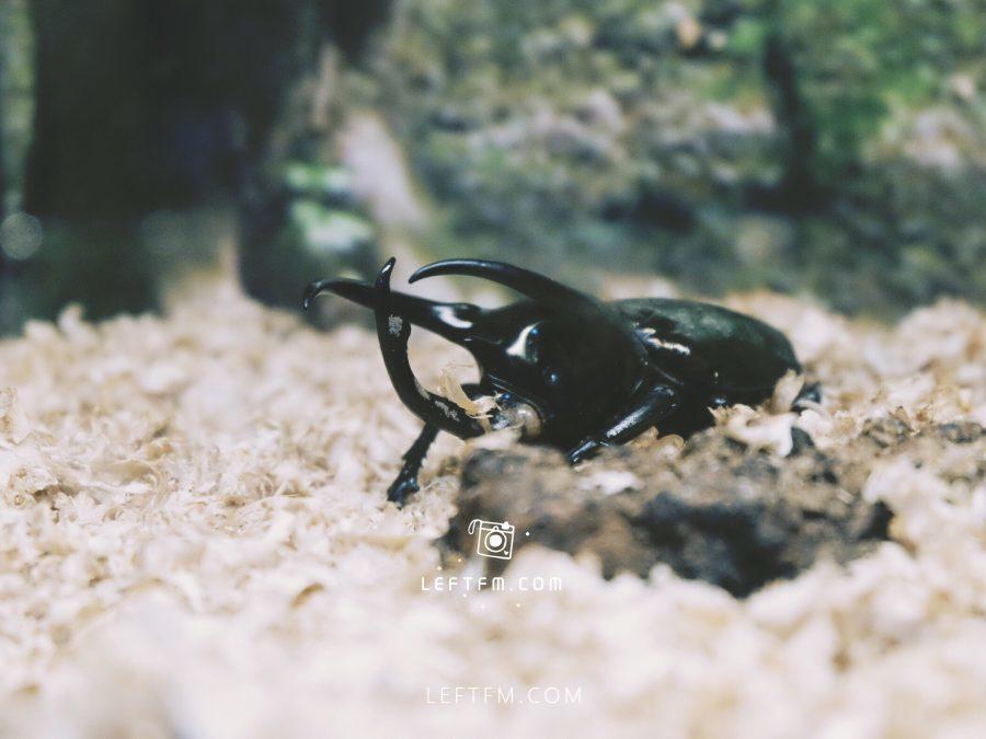 大自然昆虫博物馆