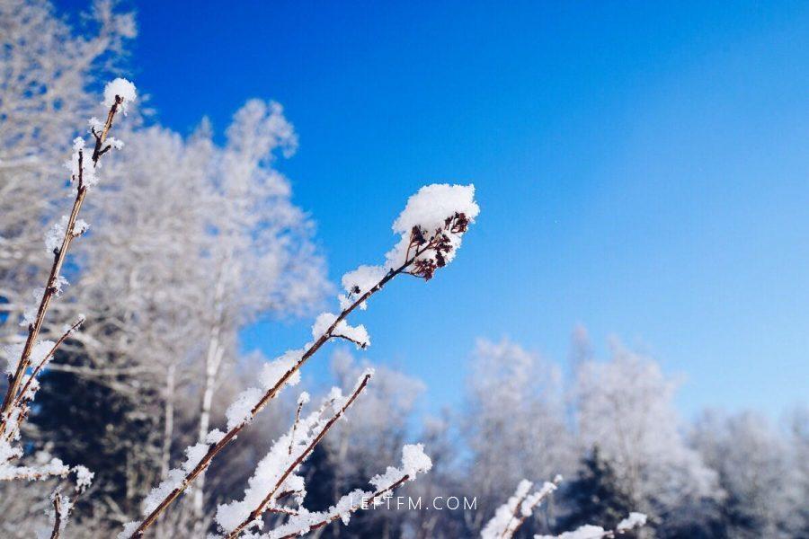 想念东北的雪