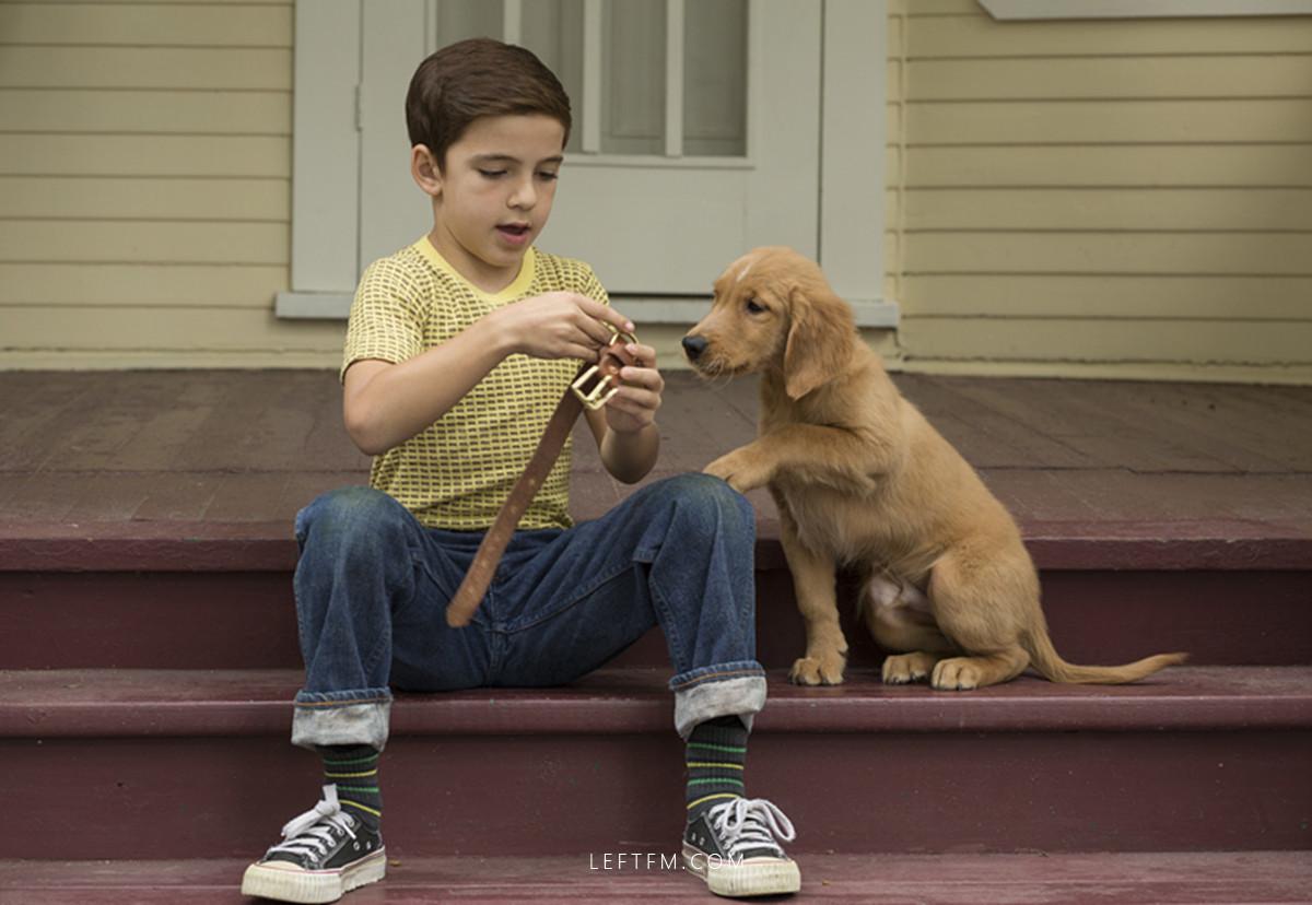 一条狗的使命:不用轮回弥补此生的遗憾