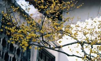 人间苦旅不知序,惊觉春到小梅枝