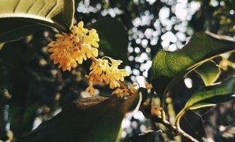秋光如蜜,该迷茫的依然会迷茫