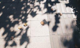 秋的美,是告别的姿态