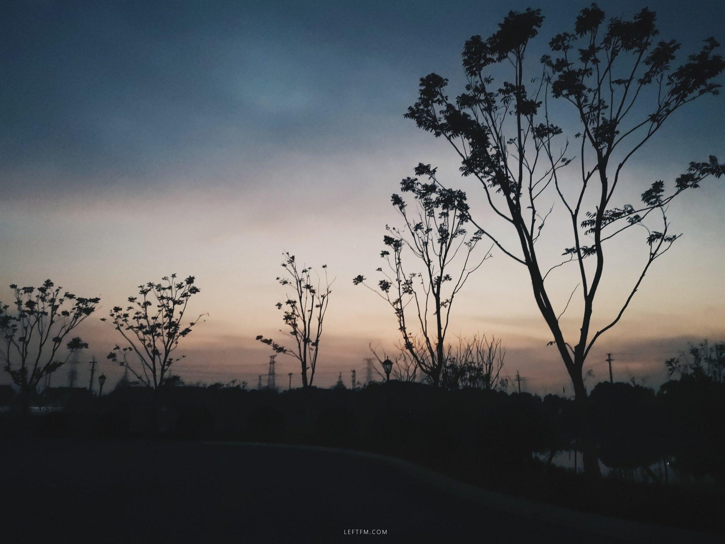 文艺夜读:一片槐树叶