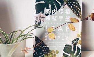 室内绿植完整手册:如果我老去,请为我种一株开花的树