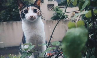 """又快到春天""""捡猫""""的时候了"""