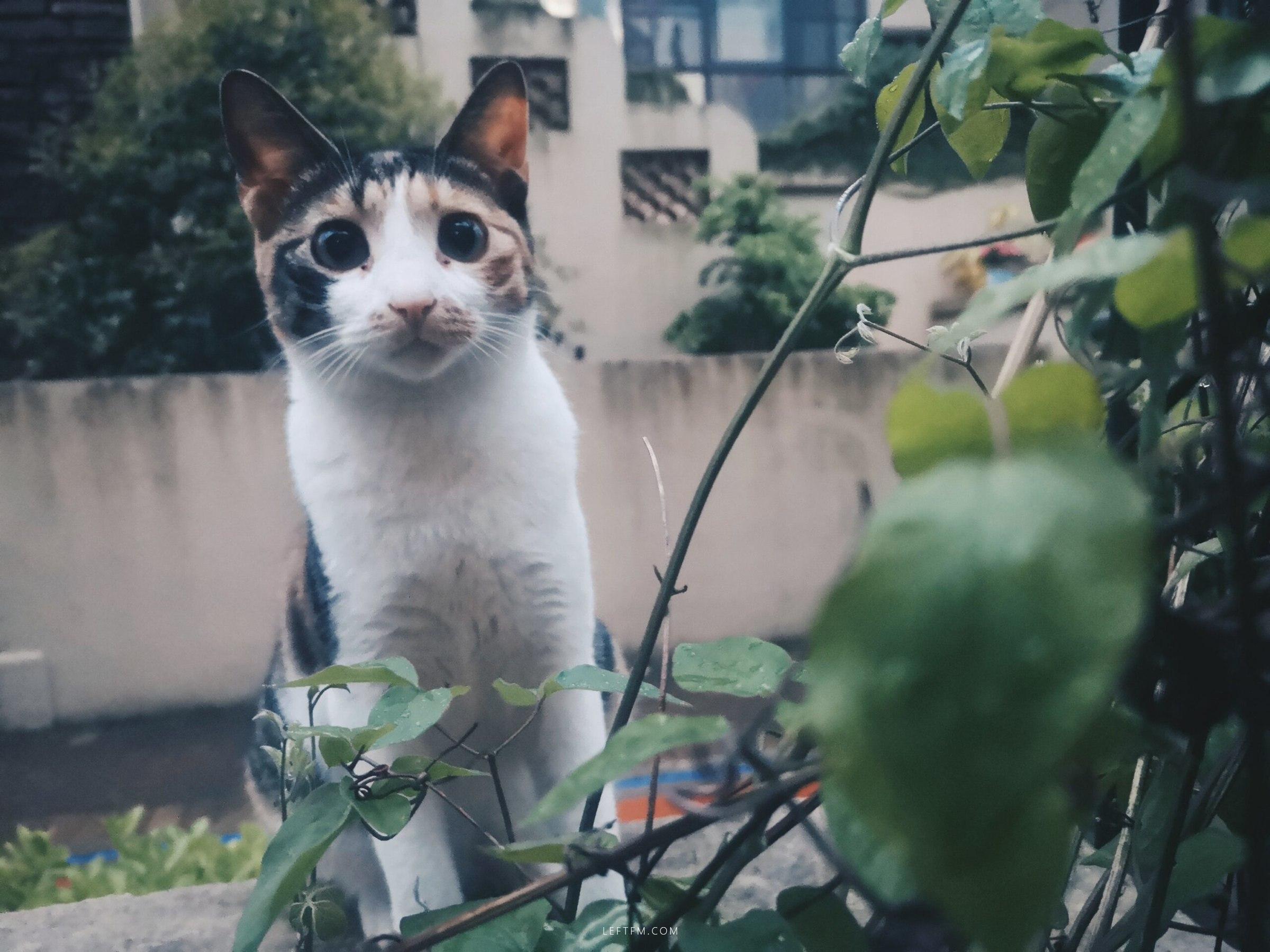 猫花花可爱多
